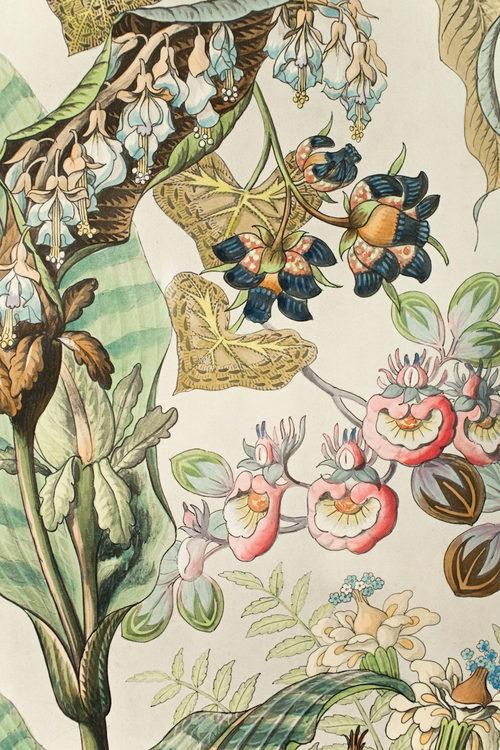 antiques atlas victorian hand coloured floral print