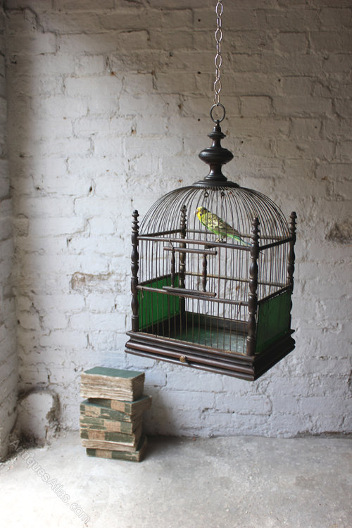 Antiques Atlas George Iii Bird Cage Holding Taxidermy