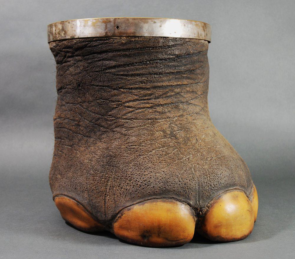 Antiques Atlas Victorian Elephant Foot With Metal Rim