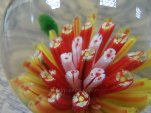Coral paperweight