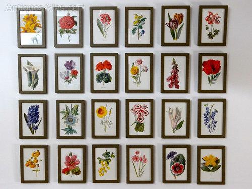 set of 24 framed botanical prints