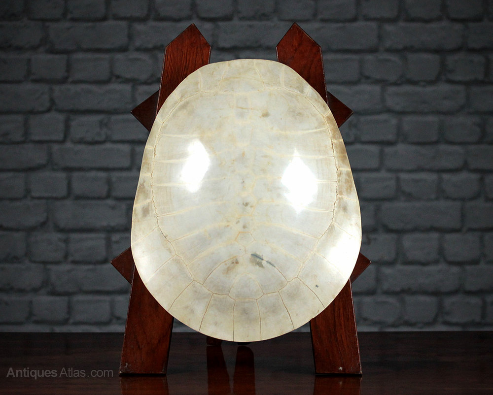 79aaa2d1535 Antiques Atlas - 19th.c. Blonde Turtle Shell