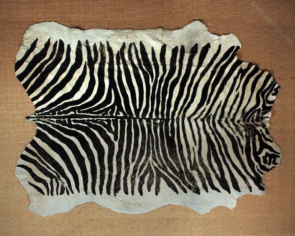 Antiques Atlas Large Zebra Skin Rug