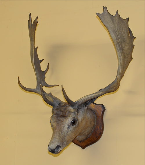 Perfect Stag Head Wall Art Picture Collection - Wall Art Design ...