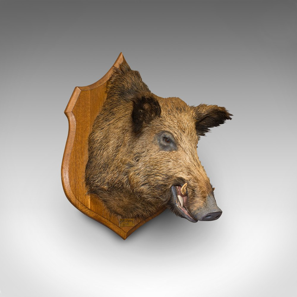 Vintage French Guectier Naturaliste Wild Boar Pig Hoof Trotter hanger taxidermy hunting trophy rural decor circa 1930-40/'s  English Shop