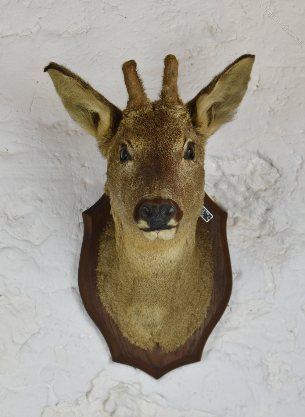 Taxidermy Dating