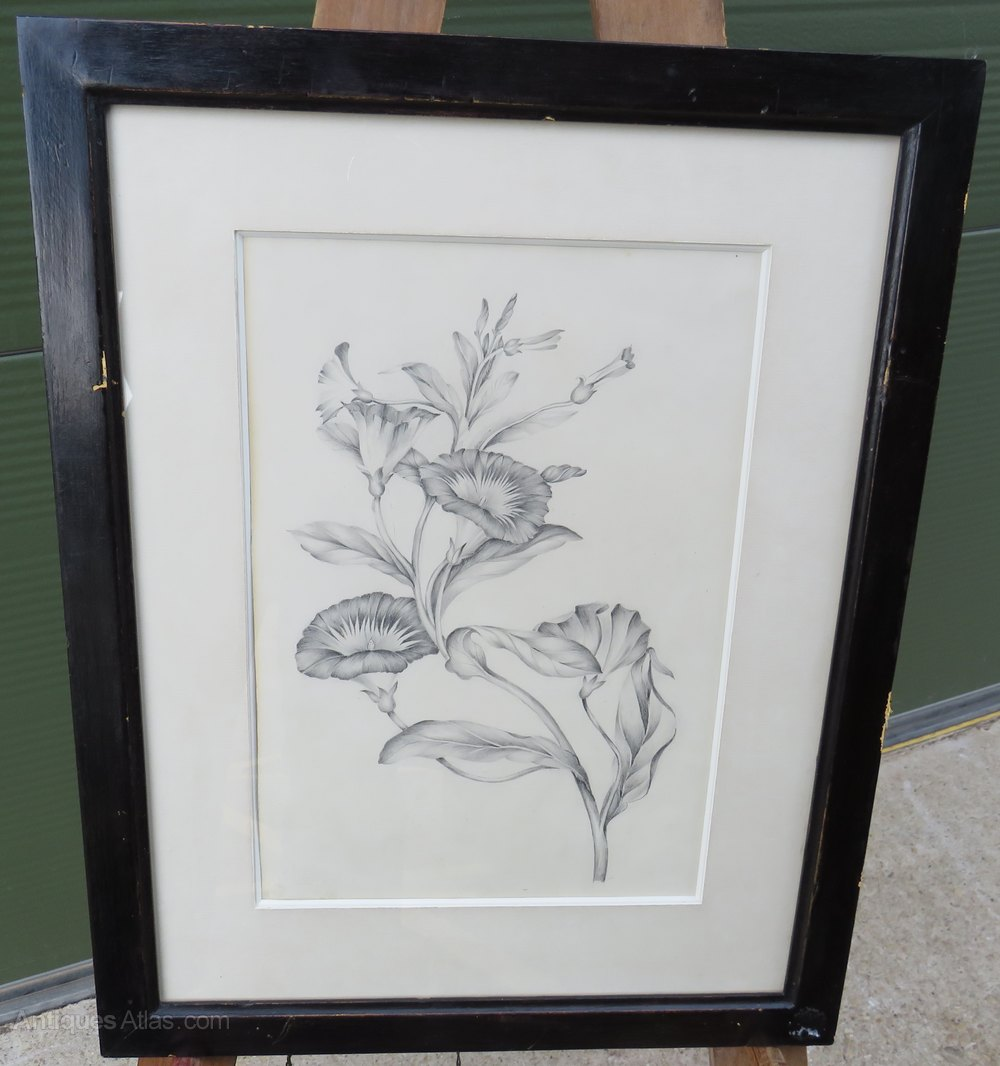 Antique framed pencil drawing picture of a flower