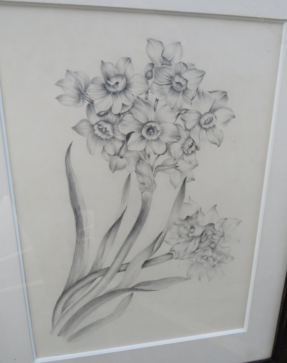 Antique framed pencil drawing picture of daffodils