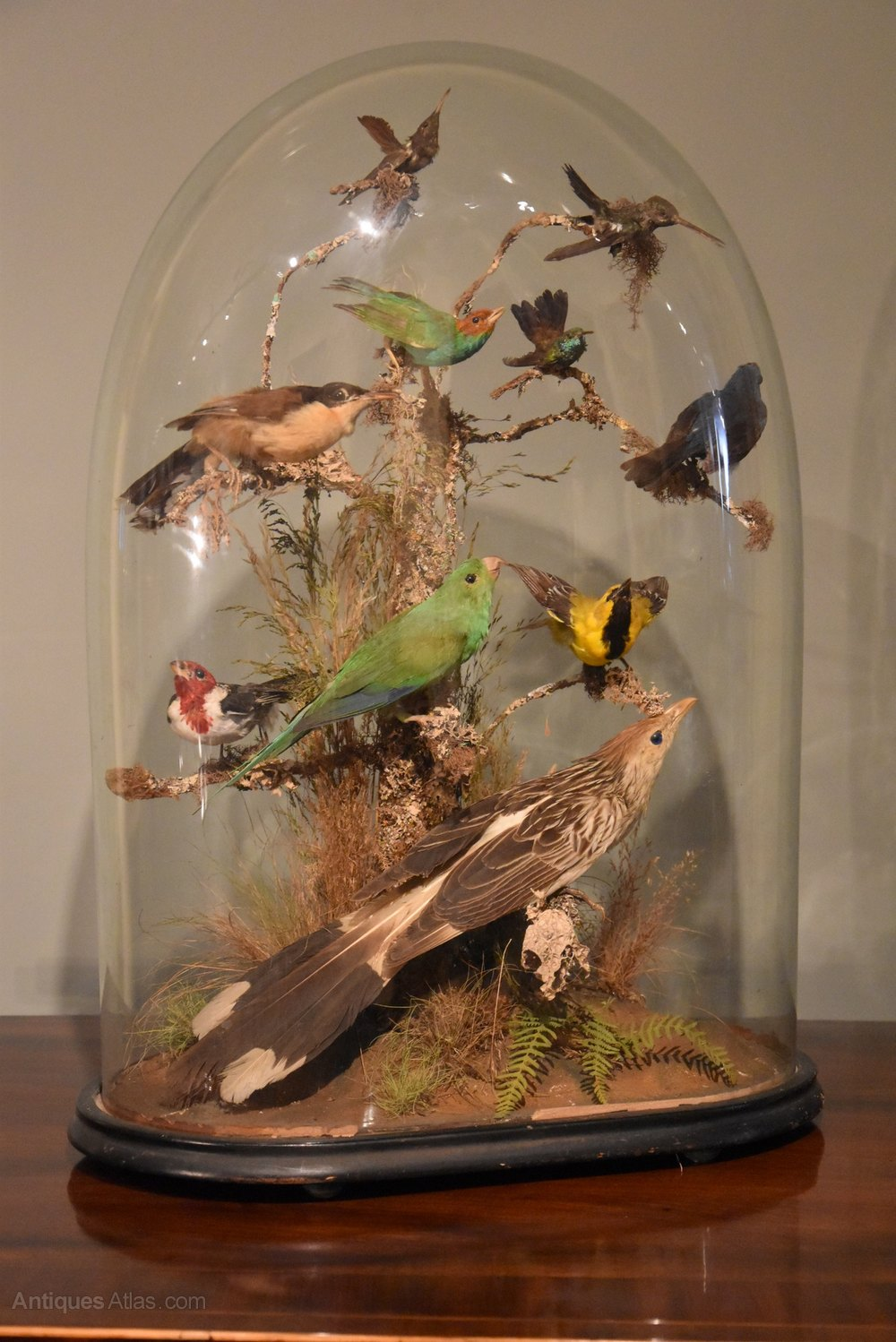 A Collection Of The Most: A Collection Of Tropical Birds Under A