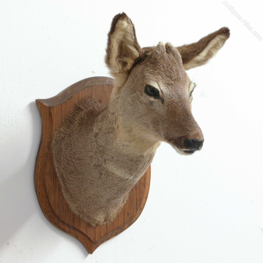 antiques atlas small mounted roe deer head. Black Bedroom Furniture Sets. Home Design Ideas